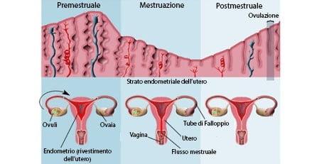 Ormoni del ciclo ovarico