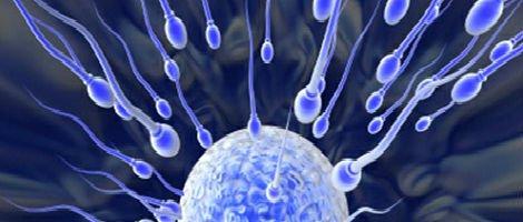 Spermatozoi verso l'ovulo
