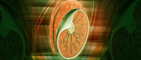 Indicazioni biopsia testicolare