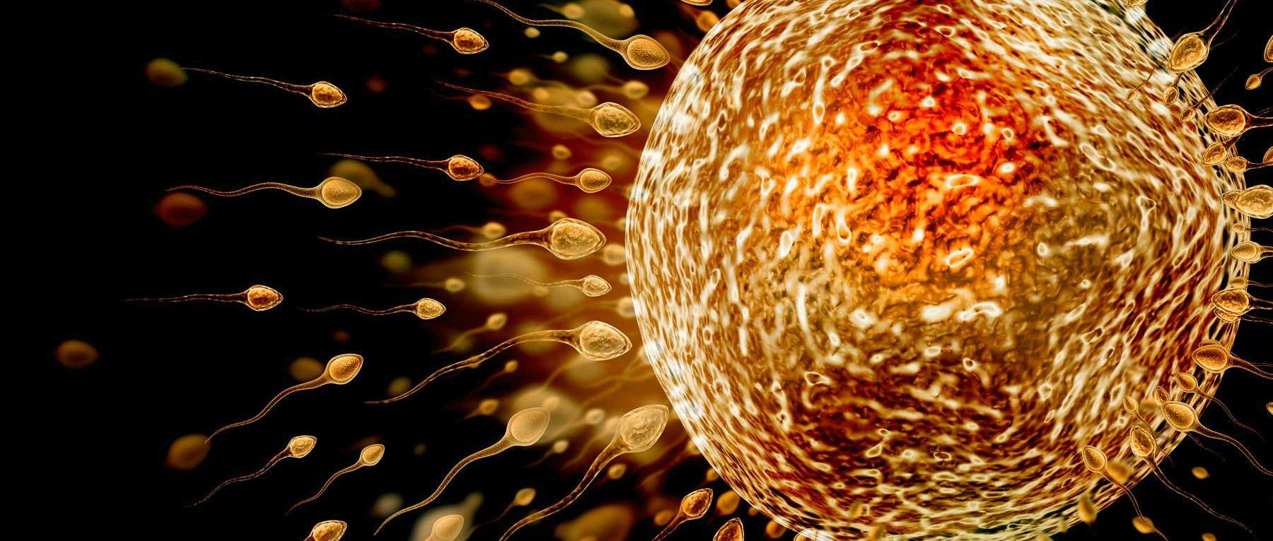 Fecondazione di un ovulo